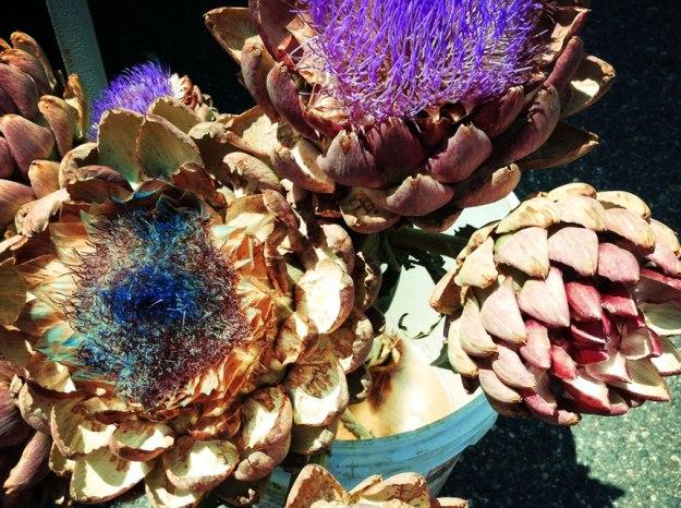 muller_blooming_artichokes_new