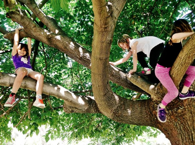 muller_climbing_trees_new