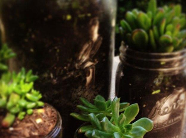 succulents_new