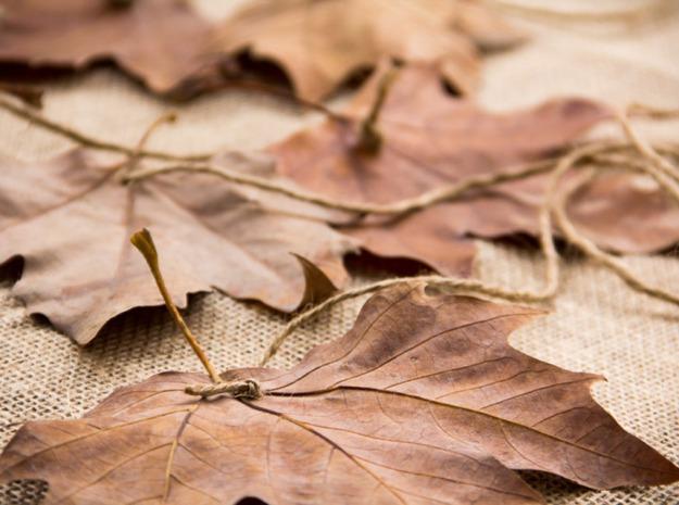 leaf5